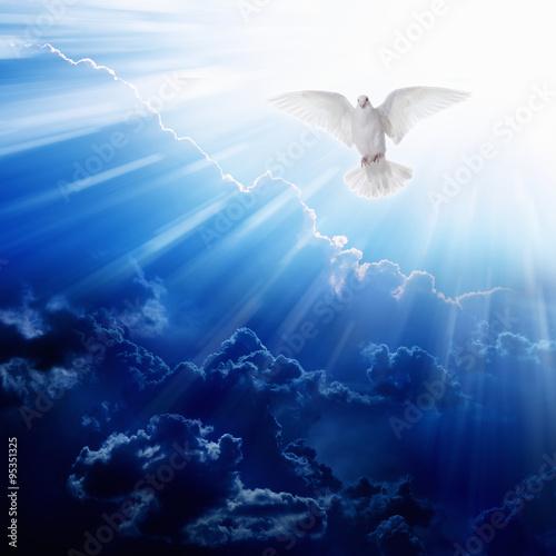 Valokuva  Holy spirit bird
