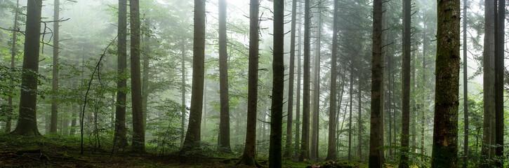 sous bois dans la brume