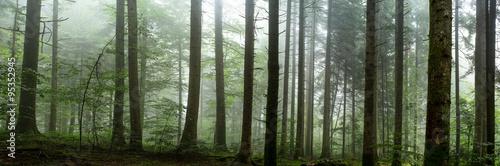 Poster Kaki sous bois dans la brume