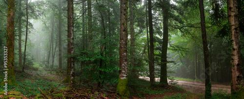 Tuinposter Weg in bos chemin dans un sous bois
