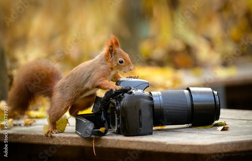 Foto op Canvas Eekhoorn Puschelfotograf