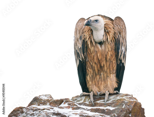 Griffon vulture perched on a stone. Isolated Fototapete