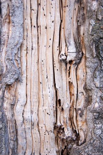 Canvas Prints Textures Corteza de árbol.