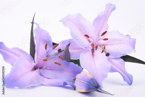 Photo  Lilium, Lily, Lilies, Lilium candidum