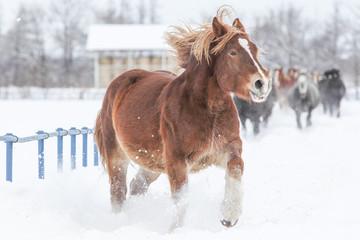 冬に走る馬