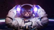 Beautiful Cat In Outer Space. ...
