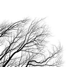 Tree Branches. Black And White Silhouette