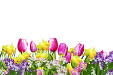 Pink And Yellow Flowers Tulips...