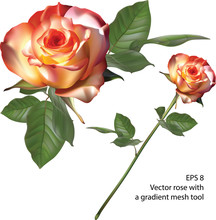 Vector Rose With A Gradient Me...