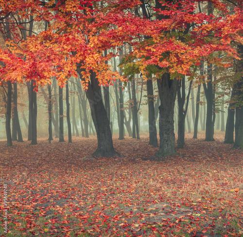 majestatyczny-jesienny-poranek-w-parku-miejskim
