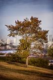 Fototapeta Fototapeta Londyn - Jedno drzewo