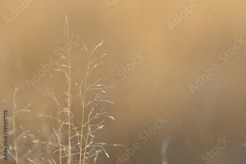 Fotografie, Obraz  Dry autumn meadow grass close up