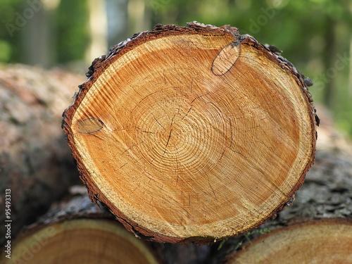 Tronc d'arbre Poster