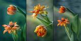 Fototapeta Kwiaty - Tulipany mix