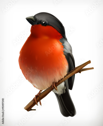 Photo  Bullfinch, vector icon