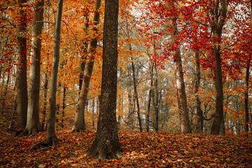 Asleep fall colors
