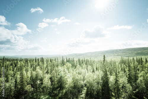 Fototapeten Wald forest in sunny day