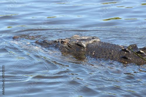 Foto op Plexiglas Krokodil Leistenkrokodil, Australien