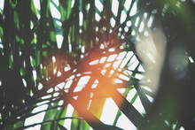Blurred Of Palm Tree
