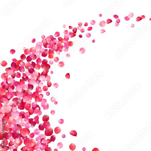 biale-tlo-z-platkami-roz