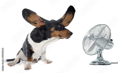 Photo  young Basset Hound and ventilator