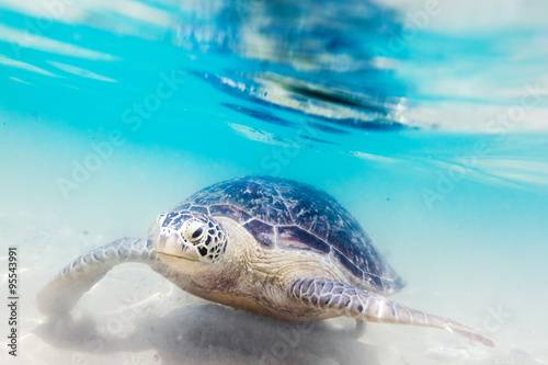 Foto op Aluminium Schildpad Turtle at Hikkaduwa beach