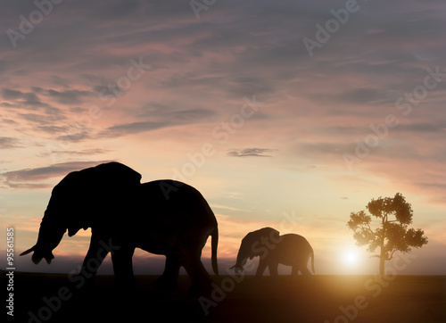 Photo Stands Cappuccino Elephants in sunset