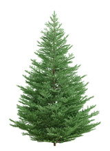 Fir Tree Isolated Over White 3d Rendering