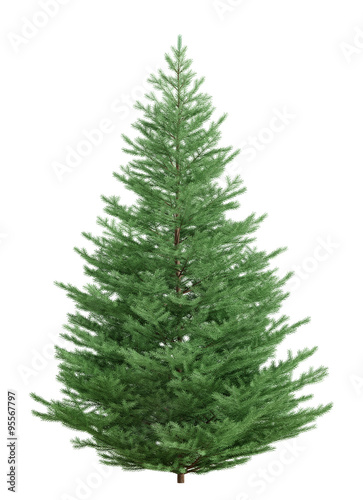 Fotografia Fir tree isolated over white 3d rendering