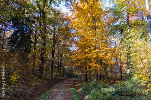 Foto op Plexiglas Bruin Herbstsonne im Wald