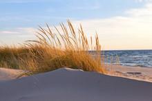 Autumn Dune Grass - Lake Michi...