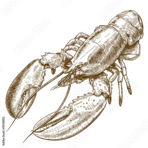Fotografia engraving  illustration of lobster