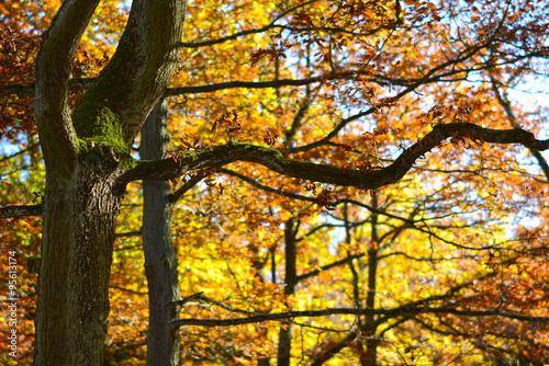 Foto op Plexiglas Landschappen Die Eifel im Herbst