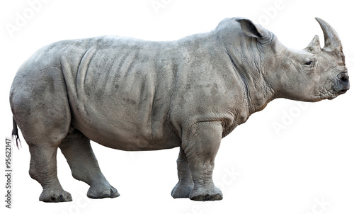 Tuinposter Neushoorn rhinoceros on white background