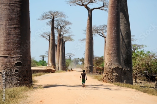 In de dag Baobab Avenue of baobabs