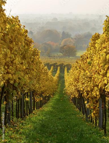 Fototapeta winnica   winnica-w-jesienno-indyjskim-lecie-zoltym