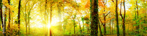 Autumn forest with sun rays #95664358