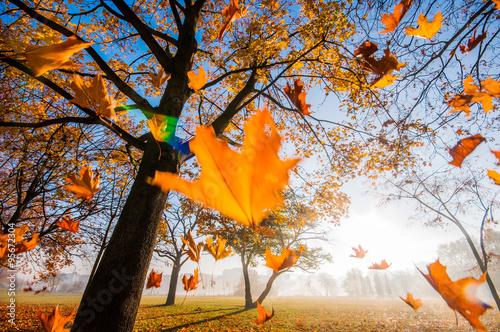 Spadające liście - fototapety na wymiar