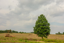 Lonely Tree After Each Other D...
