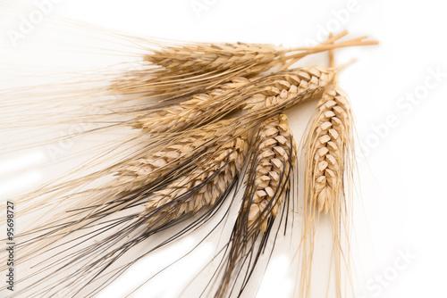 Fotografie, Obraz  Spighe di grano su fondo bianco