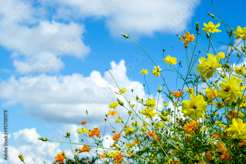 Staande foto Lente Beautiful Blossom yellow colorful daisies, cosmos in grass field flowers in a beautiful day
