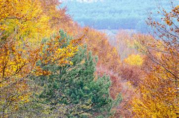 Panel Szklany Podświetlane Inspiracje na jesień Trees in autumn