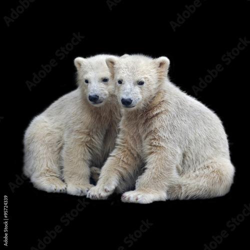 Recess Fitting Polar bear Brotherhood of polar bear cubs