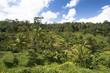 Rice camp in Bali