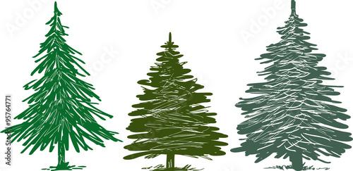 Fototapeta fir trees obraz