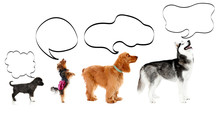 Dogs With Empty Cloud Bubble A...