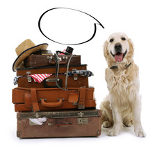 Dog And  Suitcases With Empty Cloud Bubble Above Her Head, Isolated On White
