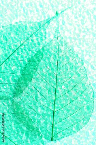 Poster Squelette décoratif de lame Abstract skeleton leaves background