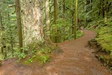 Footpath Leads Through A Rain Forest