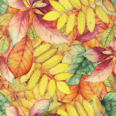 FototapetaSeamless pattern with colorful autumn leaves. Original hand drawn bright colors watercolor background.